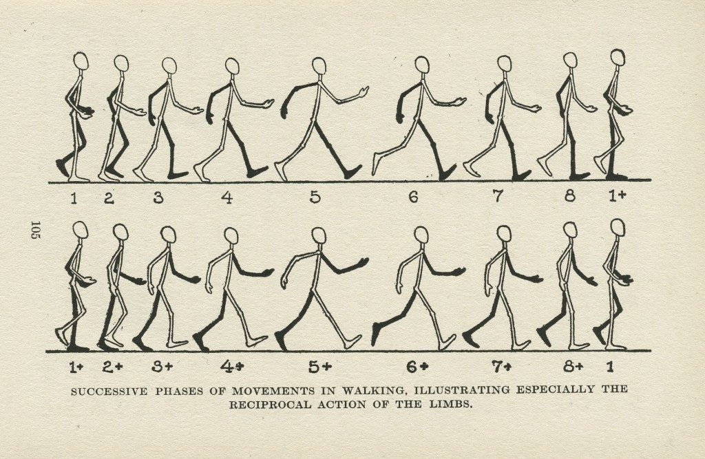 "Abbildung 5: Edwin George Lutz; ""Successive Phases of Movements in Walking, Illustrating Especially the Reciprocal Action of the Limbs"""